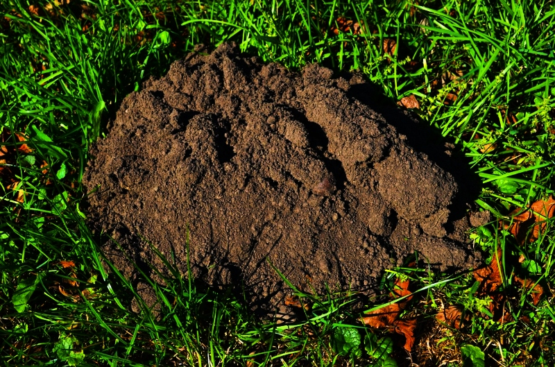 Get Rid Of Moles & Burrowing Animals With Dawn Dish Soap - Frugal